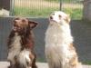Ferret (A-Wurf) und Luk (B-Wurf)