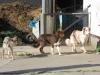 Ferret (A-Wurf), Luk und Ayou (B-Wurf)