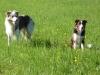 Fennek (A-Wurf) und Leif (B-Wurf)
